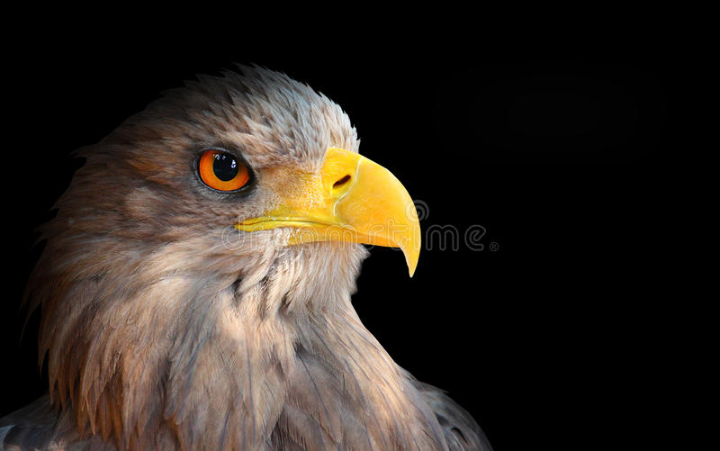 The evil eye. Awesome eagle from fantasy royalty free stock photo
