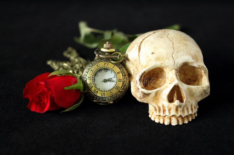 An evil human skull with a red rose in the background and on a black background. Evil human skull with a red rose in the background and on a black background stock photos