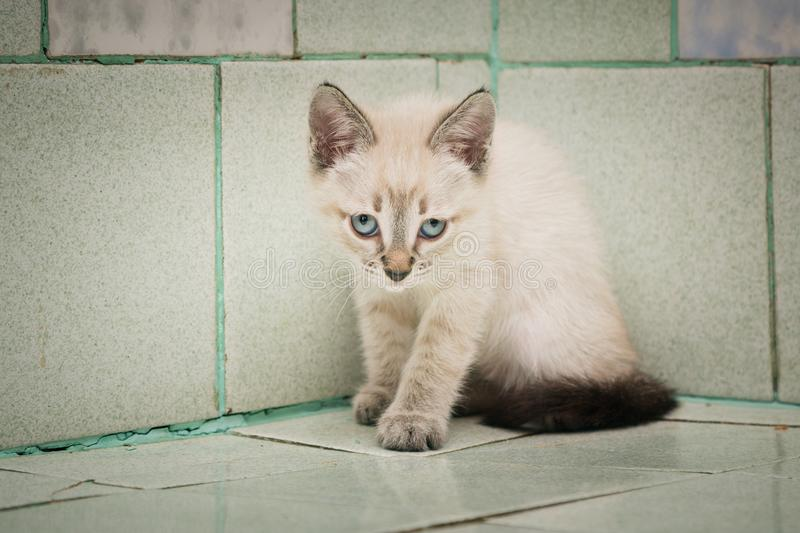 Evil kitten looks sullenly forward in the vet. The kitten needs a vaccination against rabies. royalty free stock photos