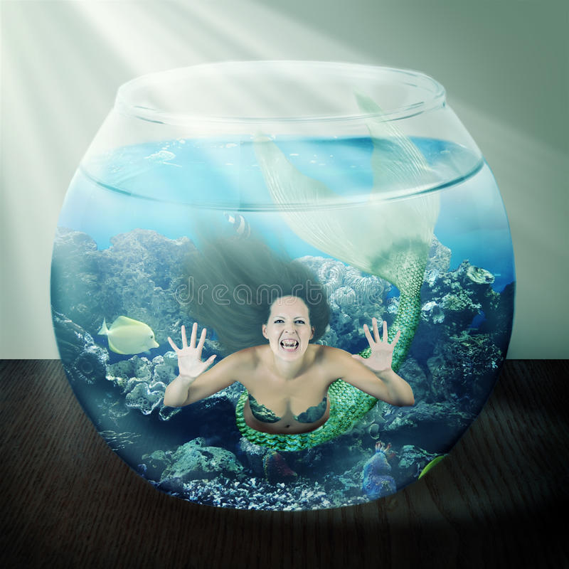 Evil mermaid in fishbowl with fish on table stock photography