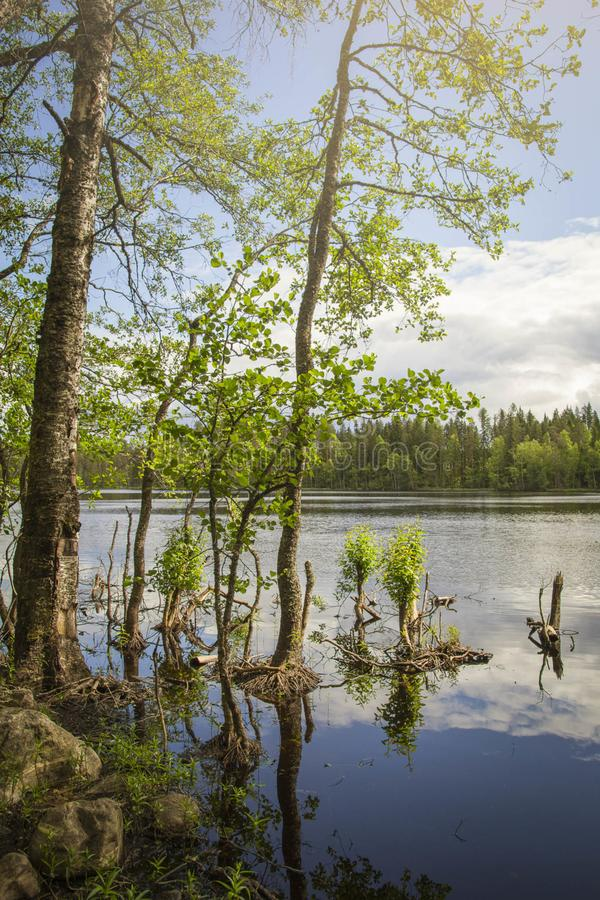 Evo Hiking Area, Hämeenlinna, Finland Free Public Domain Cc0 Image