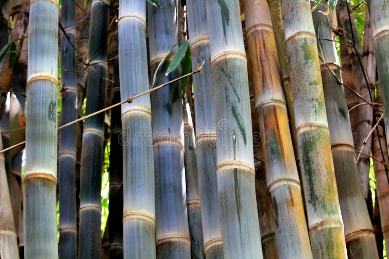 Detail of bamboo branches. Evocative detail image of bamboo branches stock images