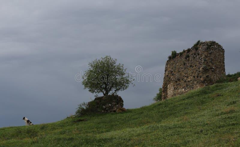 evolu??o - Árvore - a perspectiva de pedra animal imagens de stock