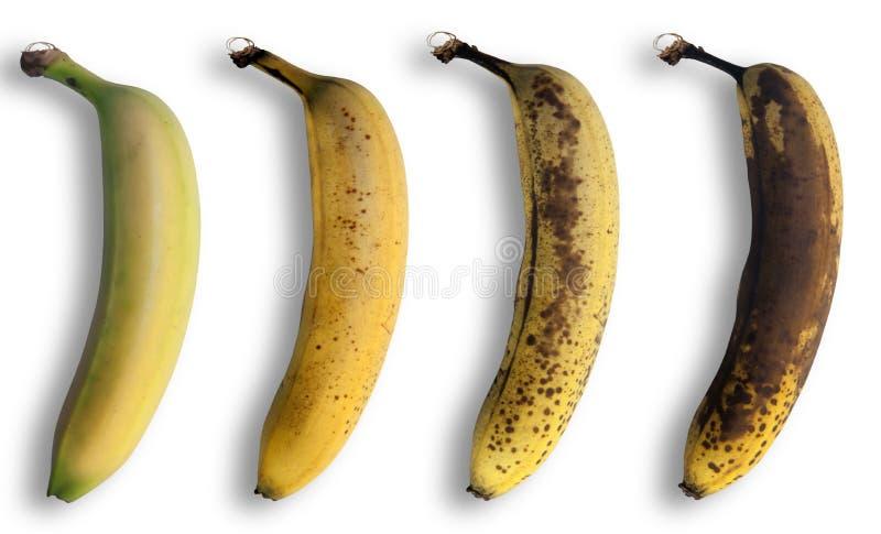 Evolución del plátano fotografía de archivo libre de regalías