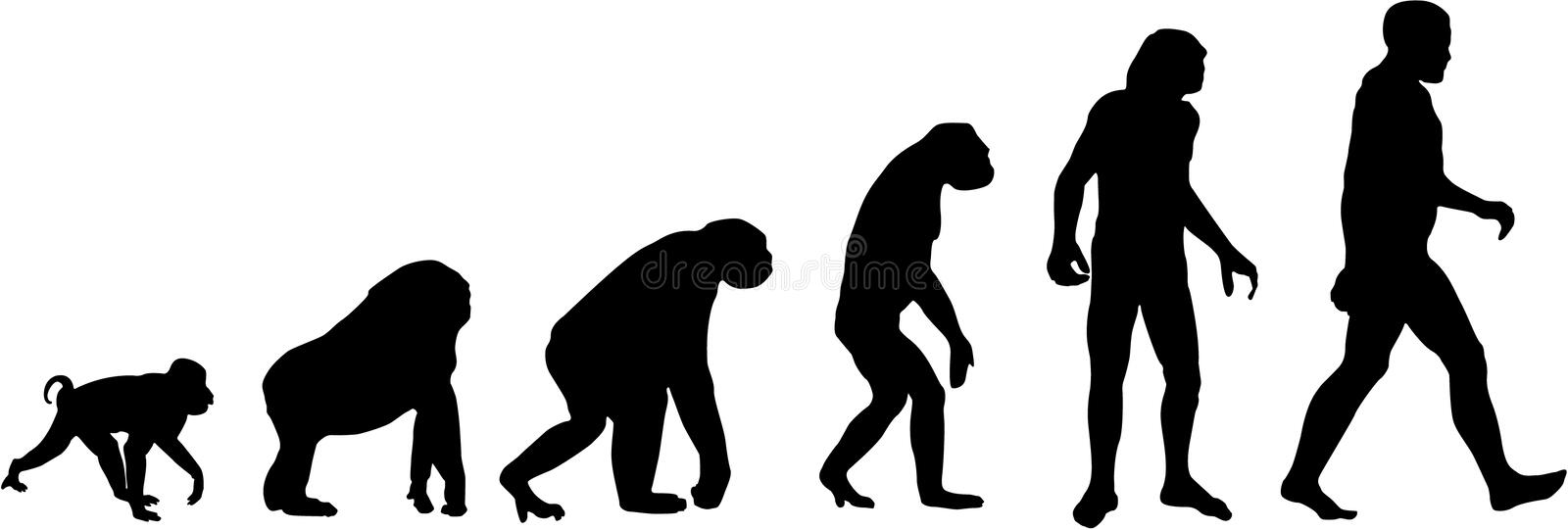 evolution vektor illustrationer