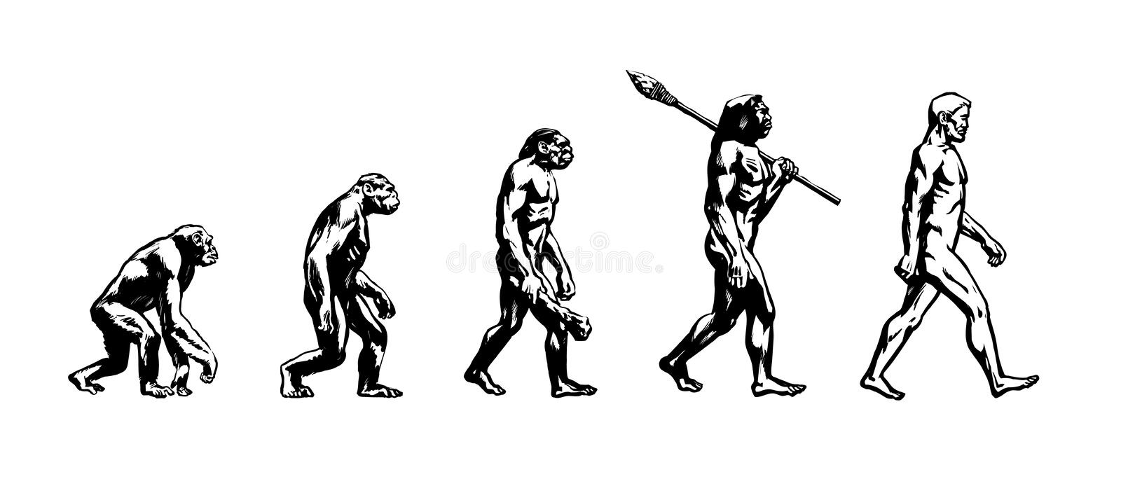 Evolution av mannen vektor illustrationer