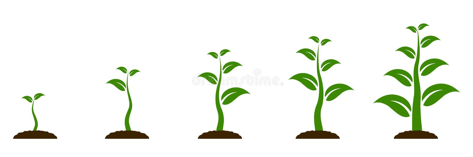 Evolution concept. Phases plant growing. Seeds sprout in ground. Planting tree infographic. Sprout, plant, tree growing vector illustration