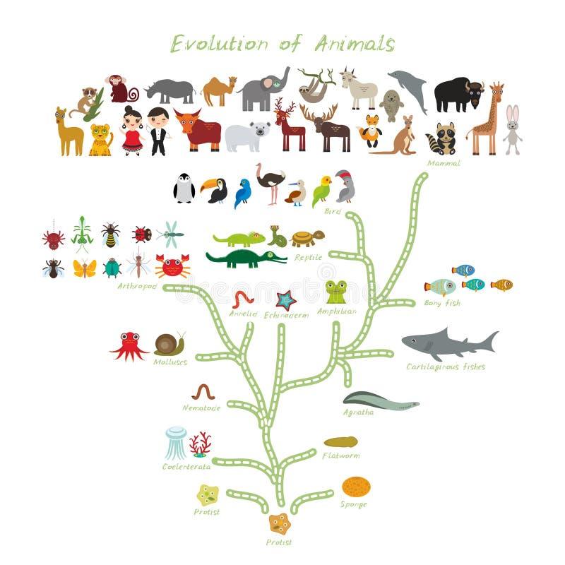 Evolution i biologi, intrigevolution av djur som isoleras på vit bakgrund barn \ 's-utbildning, vetenskap Evolutionskala royaltyfri illustrationer