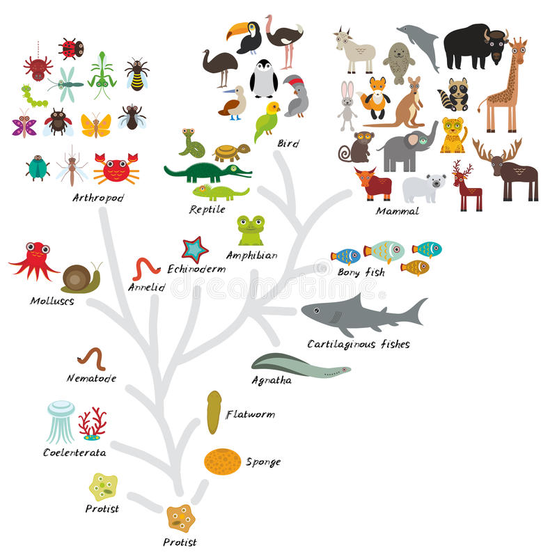 Free Evolution In Biology, Scheme Evolution Of Animals Isolated On White Background. Children S Education, Science. Evolution Scale Fro Royalty Free Stock Photography - 56930927