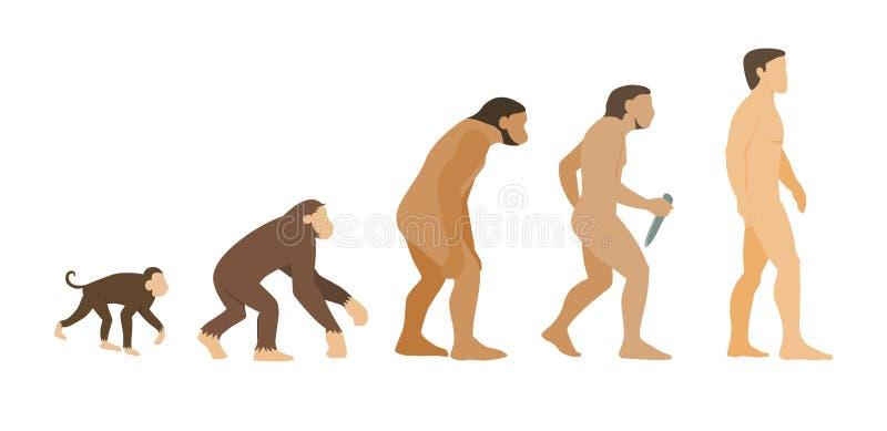 Evolution. Vector illustration of human evolution royalty free illustration