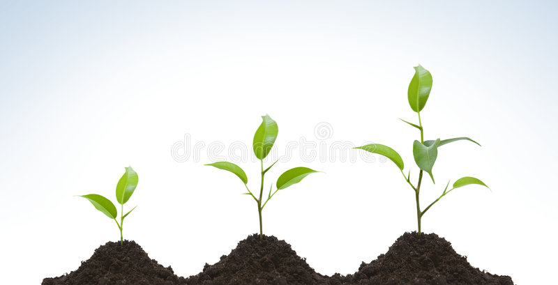 Evolution of a young plant stock photography