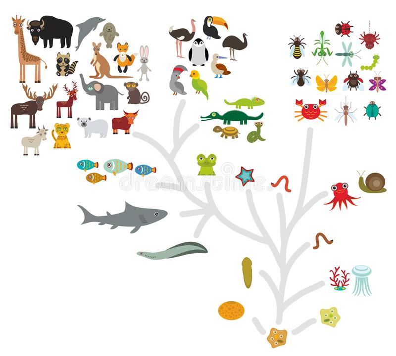 Evolutionskala från den encelliga organismen till däggdjur Evolution i biologi, intrigevolution av djur som isoleras på den vita  royaltyfri illustrationer