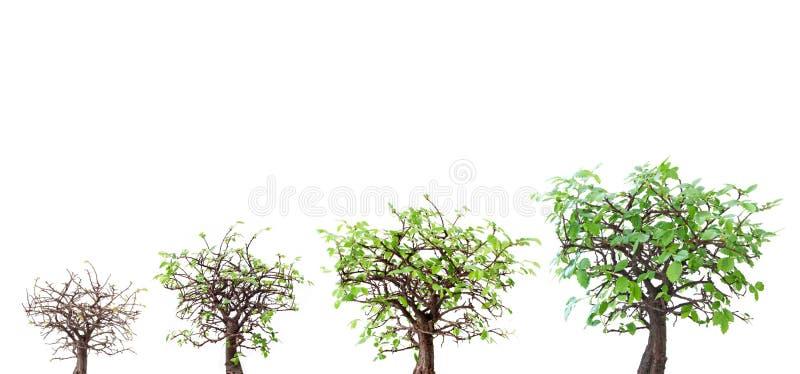 Evoluzione dell'albero fotografie stock