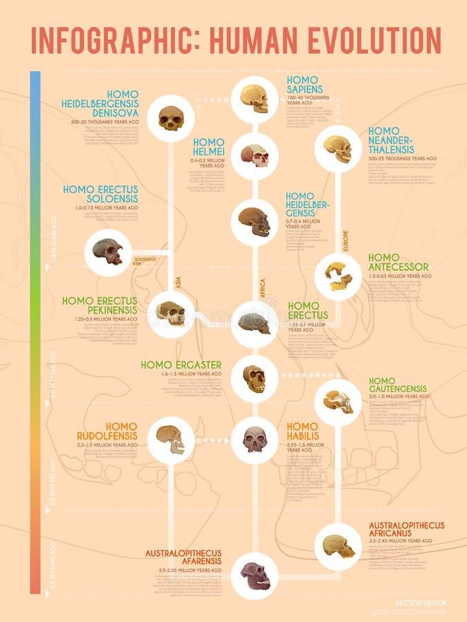 Evoluzione umana infographic illustrazione di stock