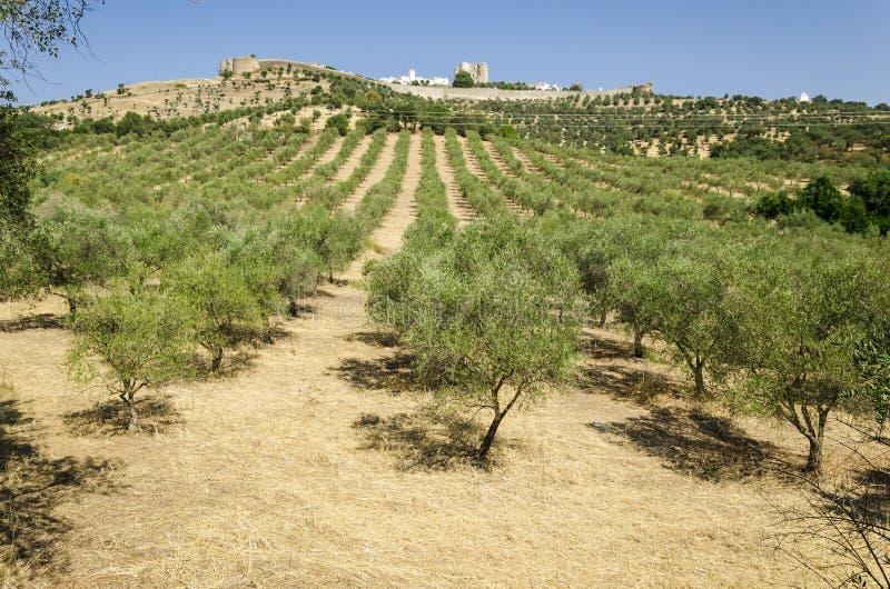 Evoramonte e oliveira foto de stock