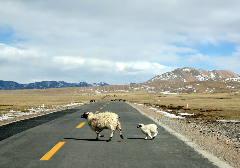 Ewe and lamb stock photo
