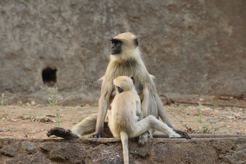 Ewige Bindung der Mutter und des Kindes stockfotos