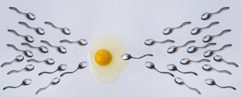 Ewolucja, nawożenie Spermatozoa, jajo i anatomia Sperm pływający w kierunku koncepcji jaj Zwycięzca, sukces i zdjęcia stock