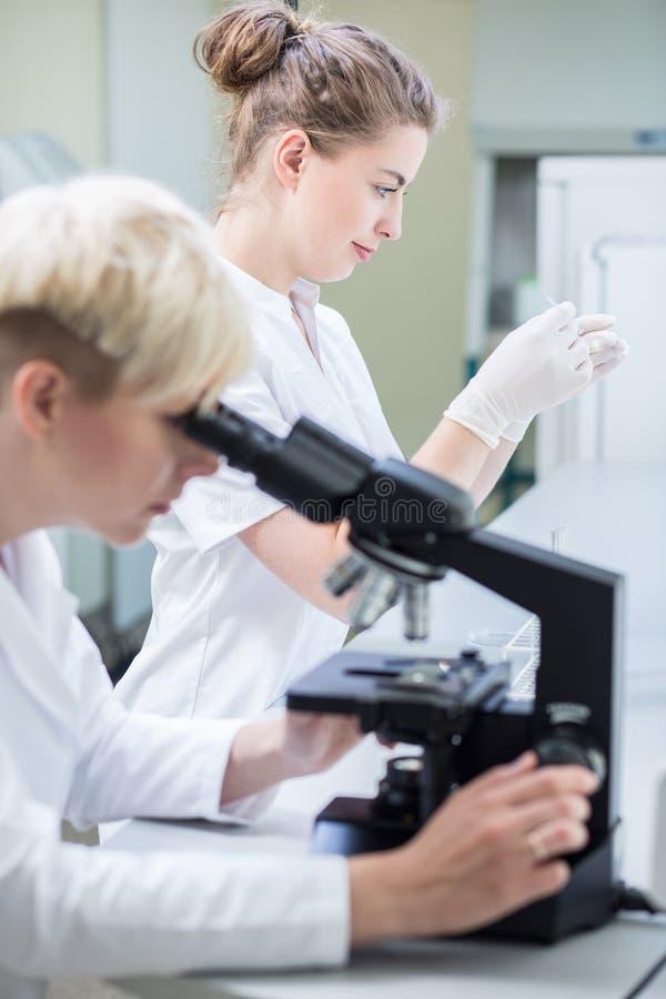 Examen microscópico de la muestra fotos de archivo
