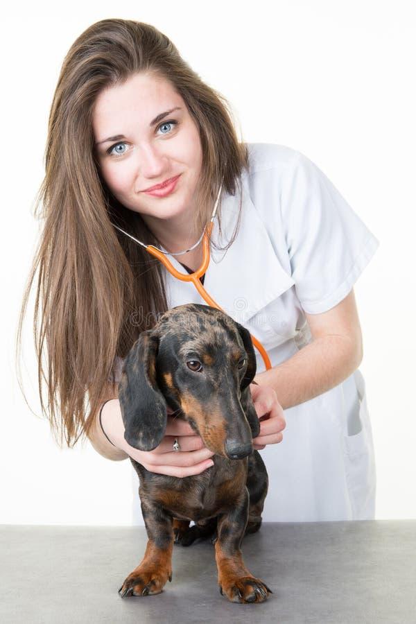 examinates de vétérinaire de jeune femme un chien utilisant le stéthoscope vétérinaire image stock