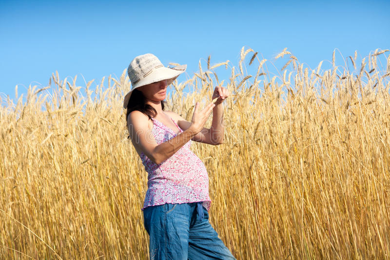 Download Examine the wheat stock image. Image of summer, examine - 29067629