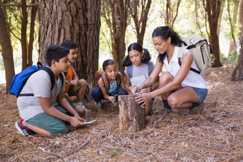 examing树桩的老师和孩子在森林里 库存照片