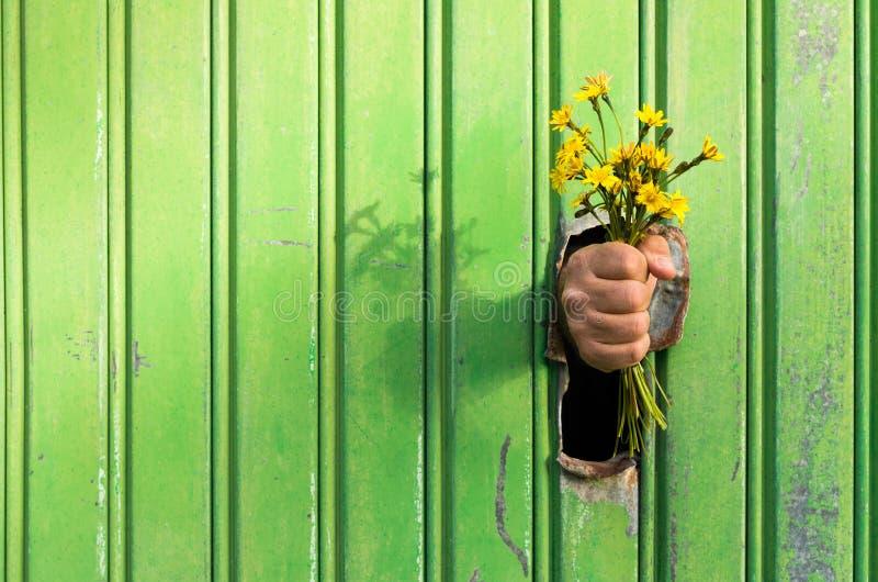 ¡Excúseme por favor! una manera agradable de disculparse ofreciendo un ramo de wildflowers amarillos de un agujero en un envase d imágenes de archivo libres de regalías