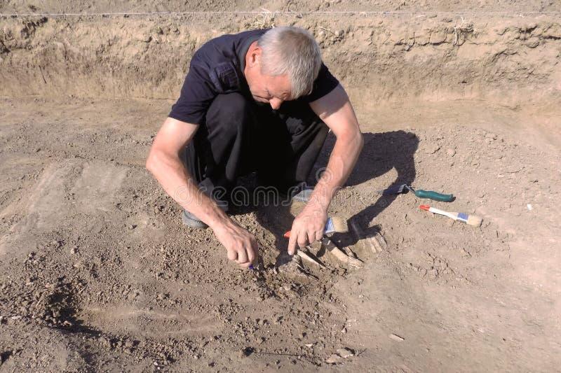 Excavación arqueológica El arqueólogo en un proceso picador, investigando la tumba, los huesos humanos, la pieza del esqueleto y  fotografía de archivo libre de regalías