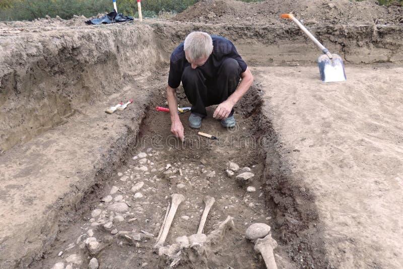 Excavación arqueológica El arqueólogo en un proceso picador, investigando la tumba, los huesos humanos, la pieza del esqueleto y  fotografía de archivo