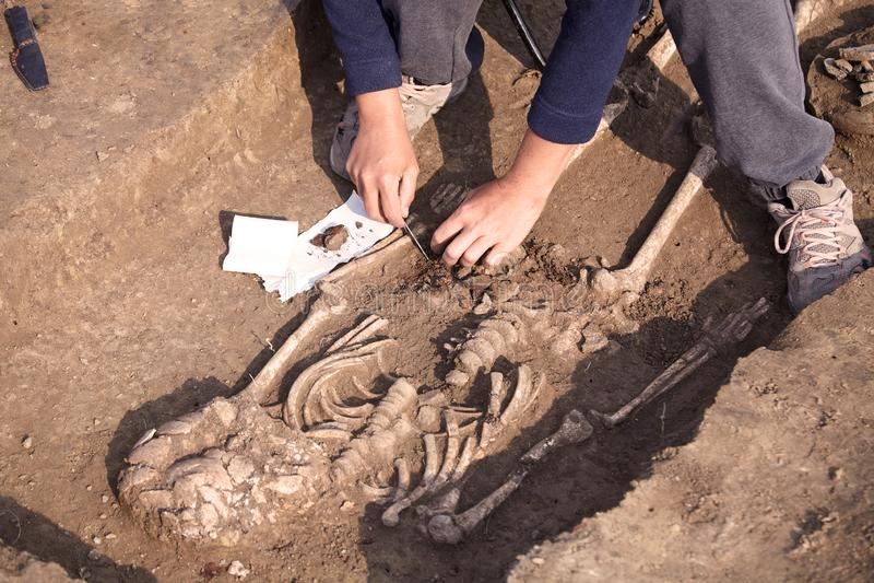 Excavaciones arqueológicas El arqueólogo en un proceso picador, investigando la tumba, los huesos humanos, la pieza del esqueleto imagen de archivo