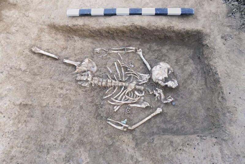 Excavaciones arqueológicas Huesos humanos de los restos del esqueleto en la tierra, con el tablón de la medida Paces de la joyerí fotografía de archivo libre de regalías