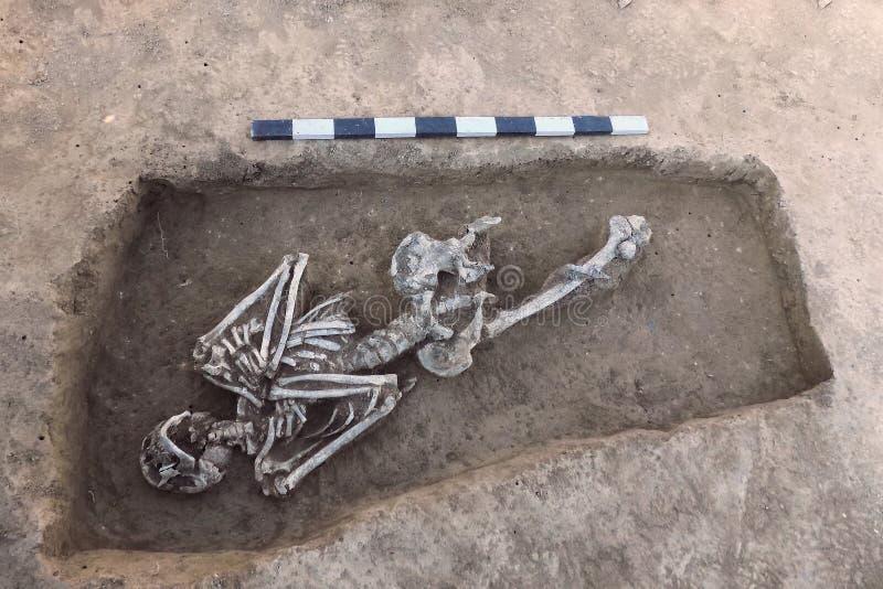 Excavaciones arqueológicas Huesos humanos de los restos del esqueleto en la tierra, con el tablón de la medida Proceso picador re imagen de archivo libre de regalías