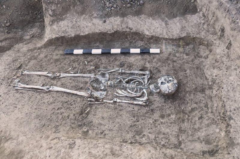 Excavaciones arqueológicas Huesos humanos de los restos del esqueleto en la tierra, con el tablón de la medida Proceso picador re fotografía de archivo