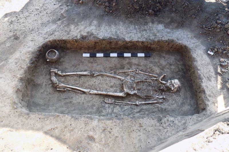 Excavaciones arqueológicas Huesos humanos de los restos del esqueleto en la tierra, con el tablón de la medida Proceso picador re imagenes de archivo