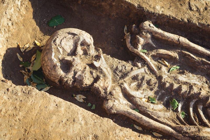 Excavaciones arqueol?gicas investigaci?n sobre el entierro humano, esqueleto, cr?neo fotos de archivo