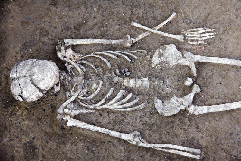 Excavaciones arqueol?gicas Los restos humanos esquel?ticos con el cr?neo son medios en la tierra Proceso picador de la ciencia re fotografía de archivo