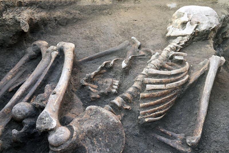 Excavaciones y huesos arqueol?gicos de los hallazgos de un esqueleto en un entierro humano, un detalle de la investigaci?n antigu foto de archivo