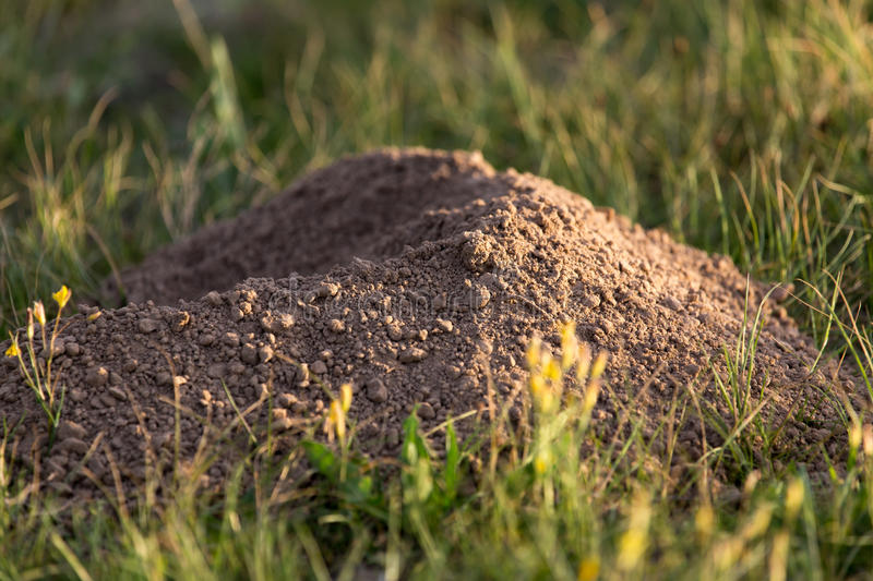 Excavated soil mole nature stock image