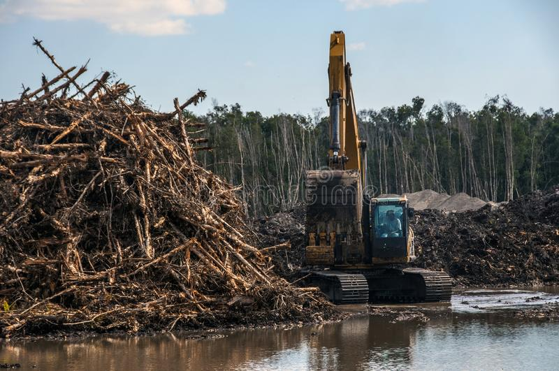 An excavator machine piling dead trees. royalty free stock photos