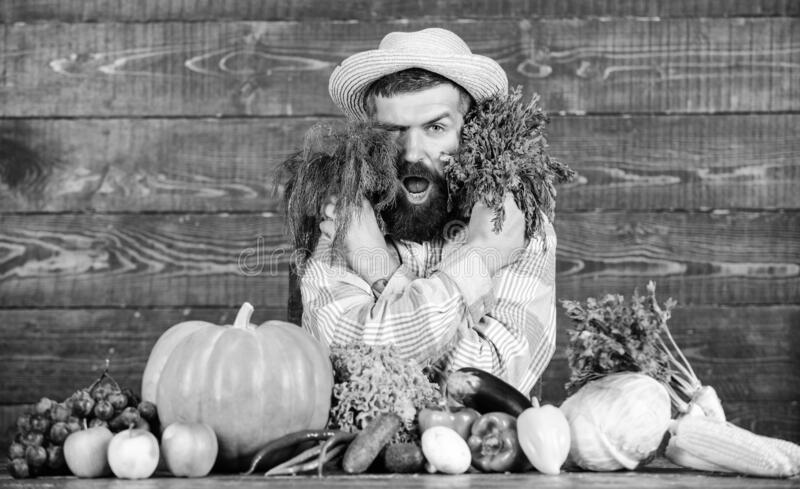 Excellent quality harvest. Man with beard proud of his harvest wooden background. Organic fertilizers make harvest royalty free stock photo