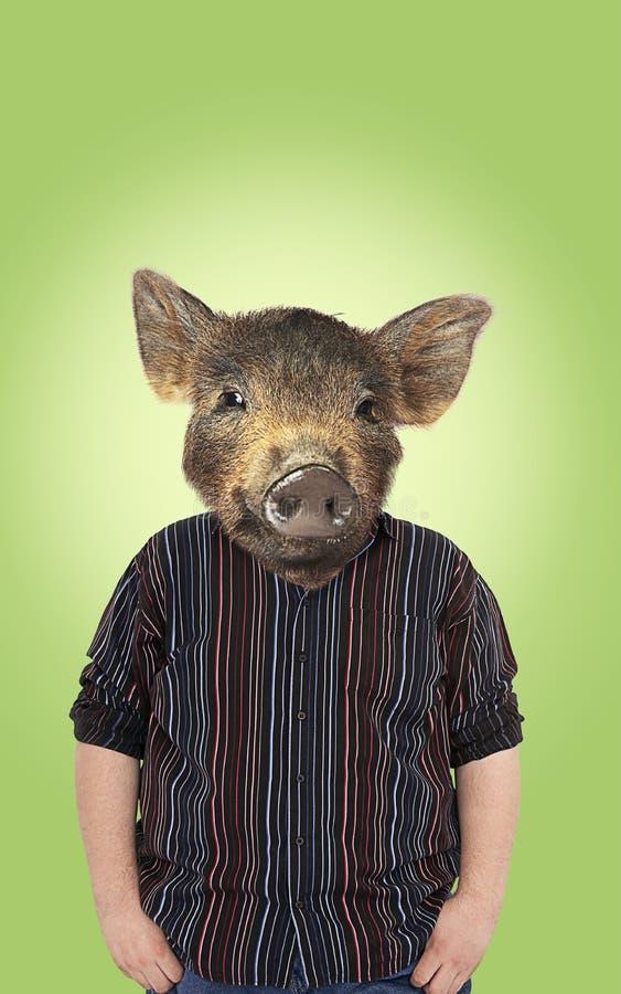 Exceso de peso con la cabeza de los cerdos foto de archivo libre de regalías