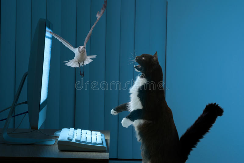 Excited Computer User Cat Stock Image