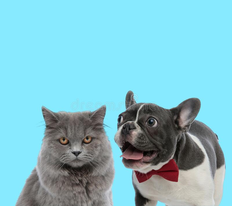 Excited Cat Stock Photo. Image Of Excited, Meow, Animal