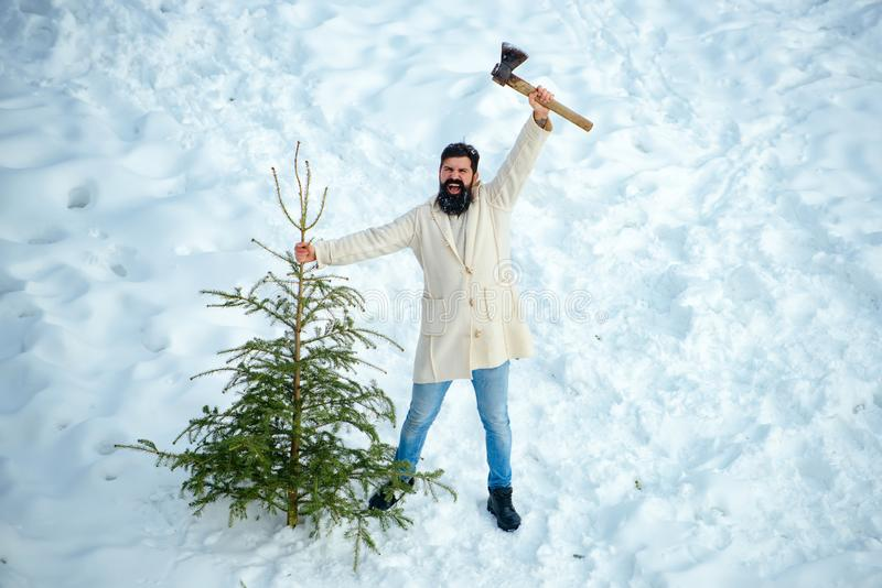 Excited Woodcutter with axe in the winter forest. Bearded man is carrying Christmas tree in the wood. Bearded man is royalty free stock image