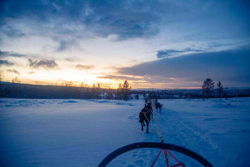 An exciting experience riding a dog sled in the winter landscape. Snowy forest and mountains with a dog team. royalty free stock photography