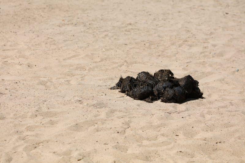 Excrementos de un rinoceronte indio foto de archivo