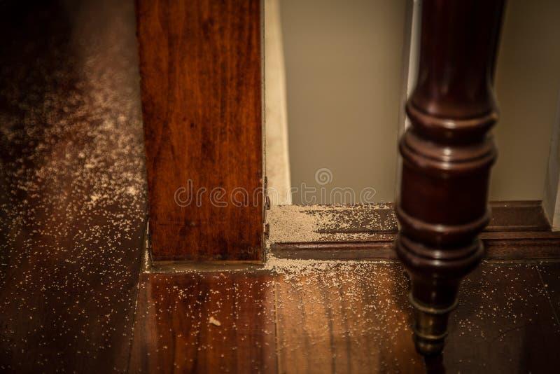 Excrementos interiores de la termita imagen de archivo