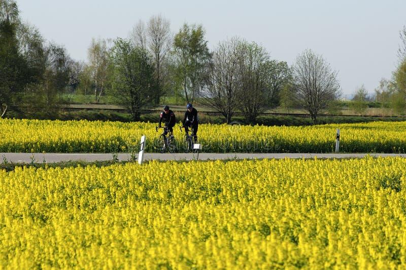 Excursão da bicicleta na mola imagens de stock