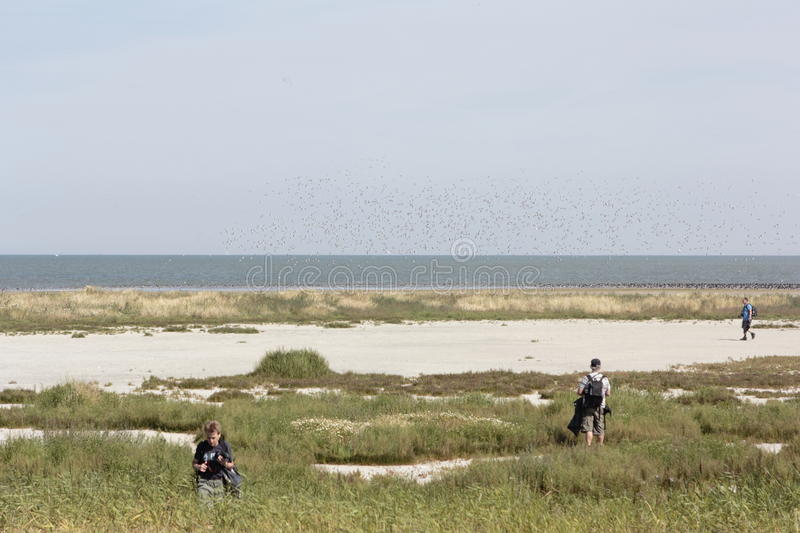 Excursion of natural monuments to the Wadden island Griend. Netherlands royalty free stock image