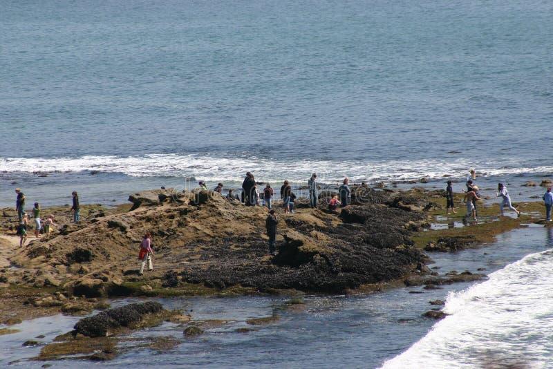 Excursion sur le terrain aux regroupements de marée photographie stock libre de droits